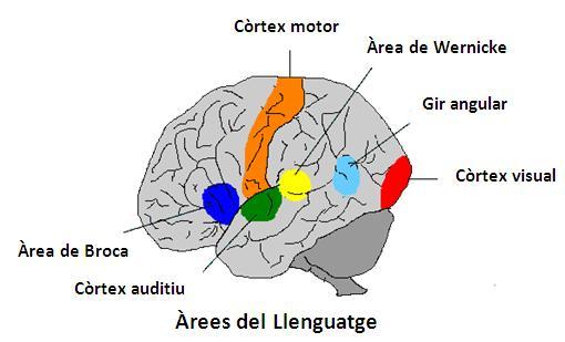 arees-llenguatge
