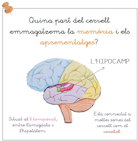 memoria i aprenentatge